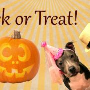 Trick or treat at Brown Dog Coffee Company in Buena Vista and Salida Colorado