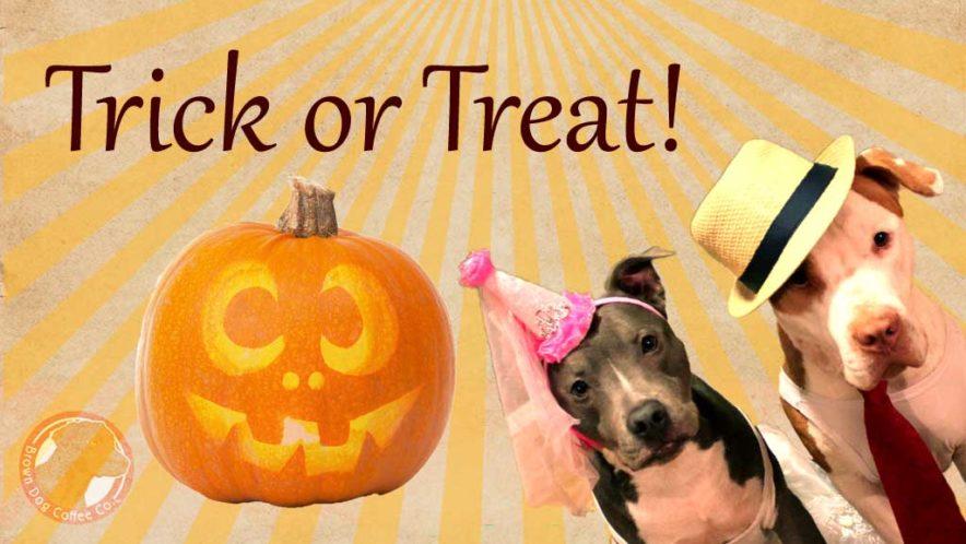 Trick or treat at Brown Dog Coffee Company in Buena Vista and Salida Colorado